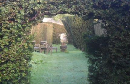 Inside the T-Shaped hedges