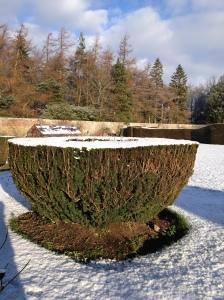 tea cup in snow